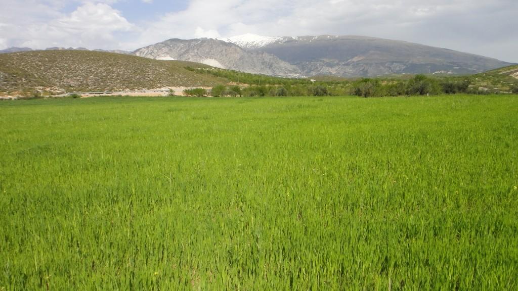 Manto verde y Sierra Nevada
